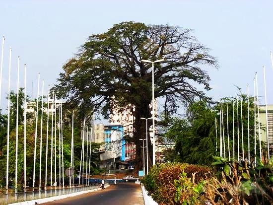 the-cotton-tree-sierra-leone